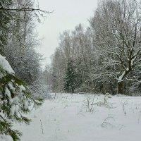 Завалило снегом :: Милешкин Владимир Алексеевич