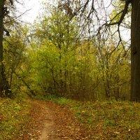 Осенний пейзаж :: Юрий Кузнецов