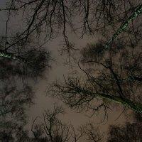 Спящие деревья :: Виктор Зенин