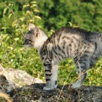 Домашний тигр :: Олеся Енина