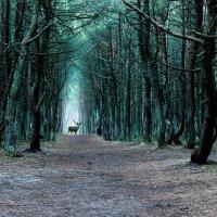Сказочный лес :: Антон Парфенов