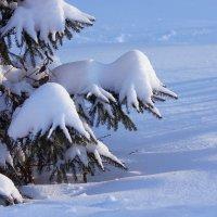 Аккорды зимы :: Ната Волга
