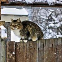 Страшнее кошки зверя нет! :: Alexandr Zykov