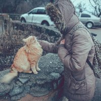 коты Крыма :: Любовь Береснева