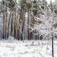 Около леса.. :: Юрий Стародубцев