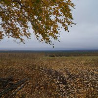 ветер :: Наталья Зимирева