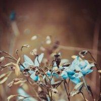 природа :: Анастасия Ананичева
