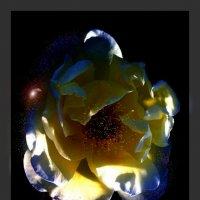 ночные цветы 5 :: Владимир Хатмулин