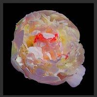 ночные цветы 1 :: Владимир Хатмулин