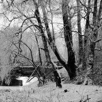 Зима черно-белая :: Павлова Татьяна Павлова