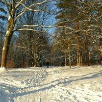 Одинокий прохожий в парке :: Милешкин Владимир Алексеевич