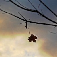 ...и осень тоже  прошла..... :: Фотогруппа Весна.
