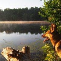 Утро на озере. :: Нина