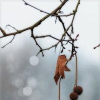Зима :: Natalja Mertens-Zorova