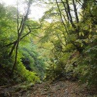 В горах Грузии :: Ирина Бархатова