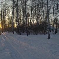 Лыжня (зовет). :: cfysx