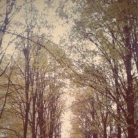 осень Краснодар :: Лизочка Довгаш