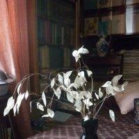 Подарок зимнего леса :: Татьяна Юрасова