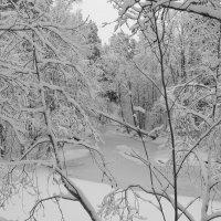Снег,снег,снег... :: Галина Полина