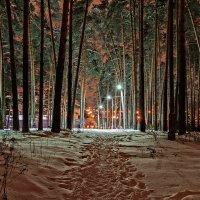 зимний вечер в парке :: Galina