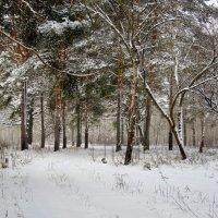 Зима :: Elena .