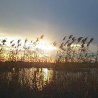 лебяжье озеро...закат...измаил...украина :: Жанна Романова