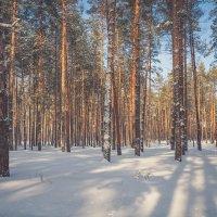 Зимний лес :: Юлия Лебедева