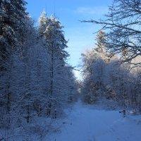зима :: Владимир Сергеевич