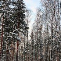 морозный день :: ник. петрович земцов