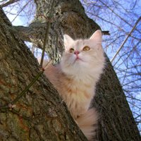 кот на дереве :: Олег Сливанков