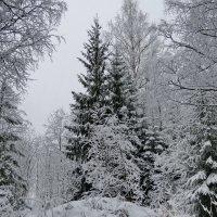 Зимний лес... :: Светлана