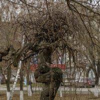 Вот такое дерево :: Игорь Сикорский