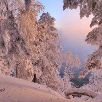 Зима! В твоем плену не только лес и поле :: Галина