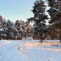 В морозный, солнечный день :: Павлова Татьяна Павлова