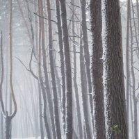 Снегопад :: Сергей Корнев