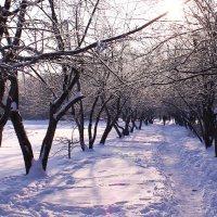 Зимний сад белым пламенем объят :: Татьяна Ломтева