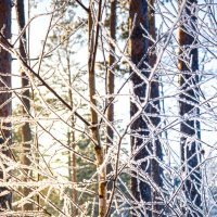 Прогулка по лесу на лыжах :: Александр Картеропуло
