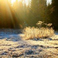 Морозное утро :: Ольга Чирятникова