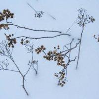 Зима рисует... :: Svetlana Sneg