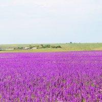 Цветочное поле :: Алиме Исмаилова