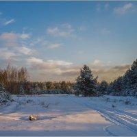 Зимний лес... :: Анатолий __