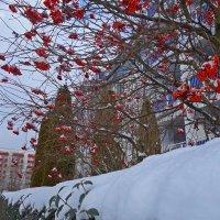 Краски января... :: Galina Dzubina