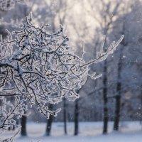 Зимнее настроение! :: Валерия заноска