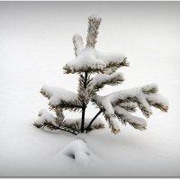Зимой :: Вячеслав Минаев