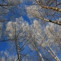 Взгляд в небо :: Наталья Лунева