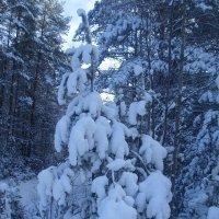 В Зимнем лесу :: BoxerMak Mak