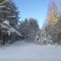 Зимний лес меня позвал... :: BoxerMak Mak