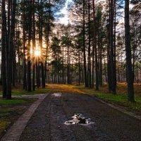 лес :: Vitalij P