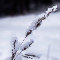 Снег :: Юлиана