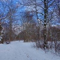 Наконец-то и к нам заглянула Зима.... :: Galina Dzubina
